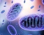 همه آنچه باید در مورد بیماری قارچ سیاه بدانیم / علایم و درمان بیماری قارچ سیاه