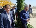 عوامل برکناری مدیرعامل ایران خودرو تشریح شد