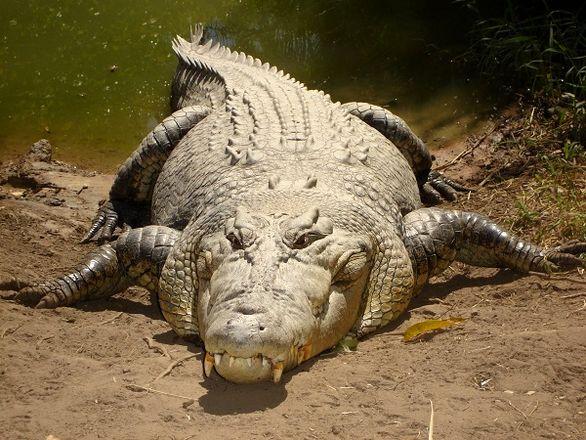 ترس و وحشت از کشف یک تمساح 2 متری در اروند رود + عکس